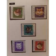 Colección Collection Gatos cats